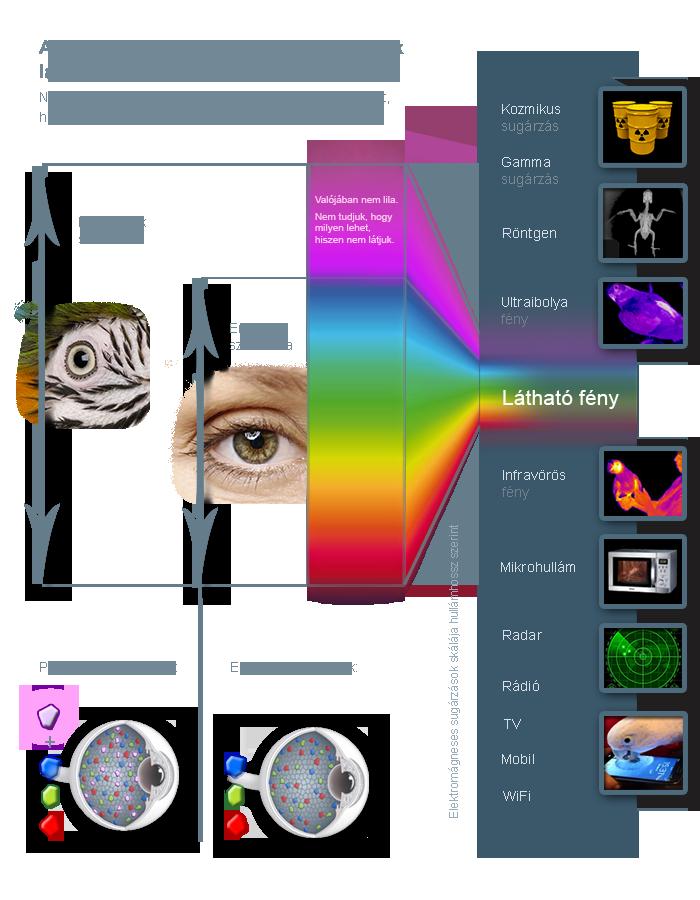 a látás színlátása