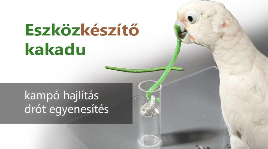Eszközkészítő kakadu