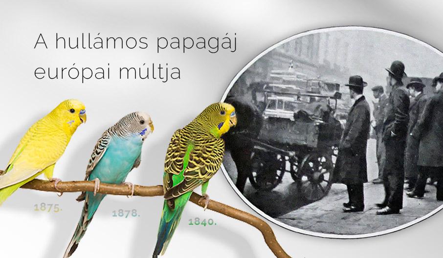 A hullámos papagáj múltja Európában