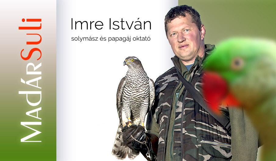 Papagájok és ragadozó madarak iskolája