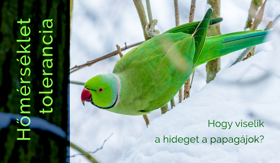 Papagájok hőmérséklet toleranciája