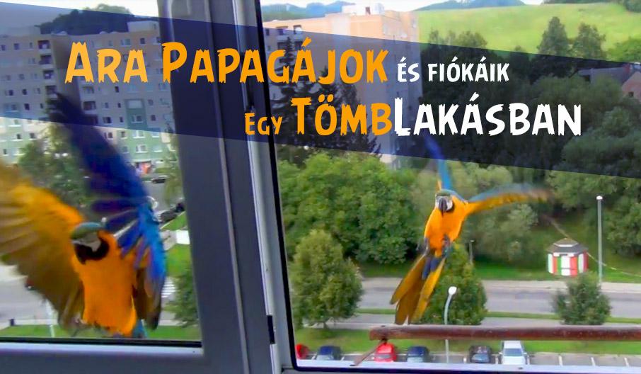 Ara papagájok tömblakásban