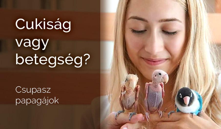 A csupasz papagáj fertőző-e?