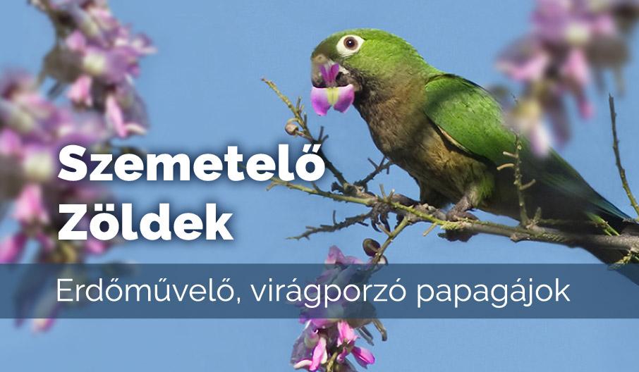 Erdőművelő, virágporzó papagájok